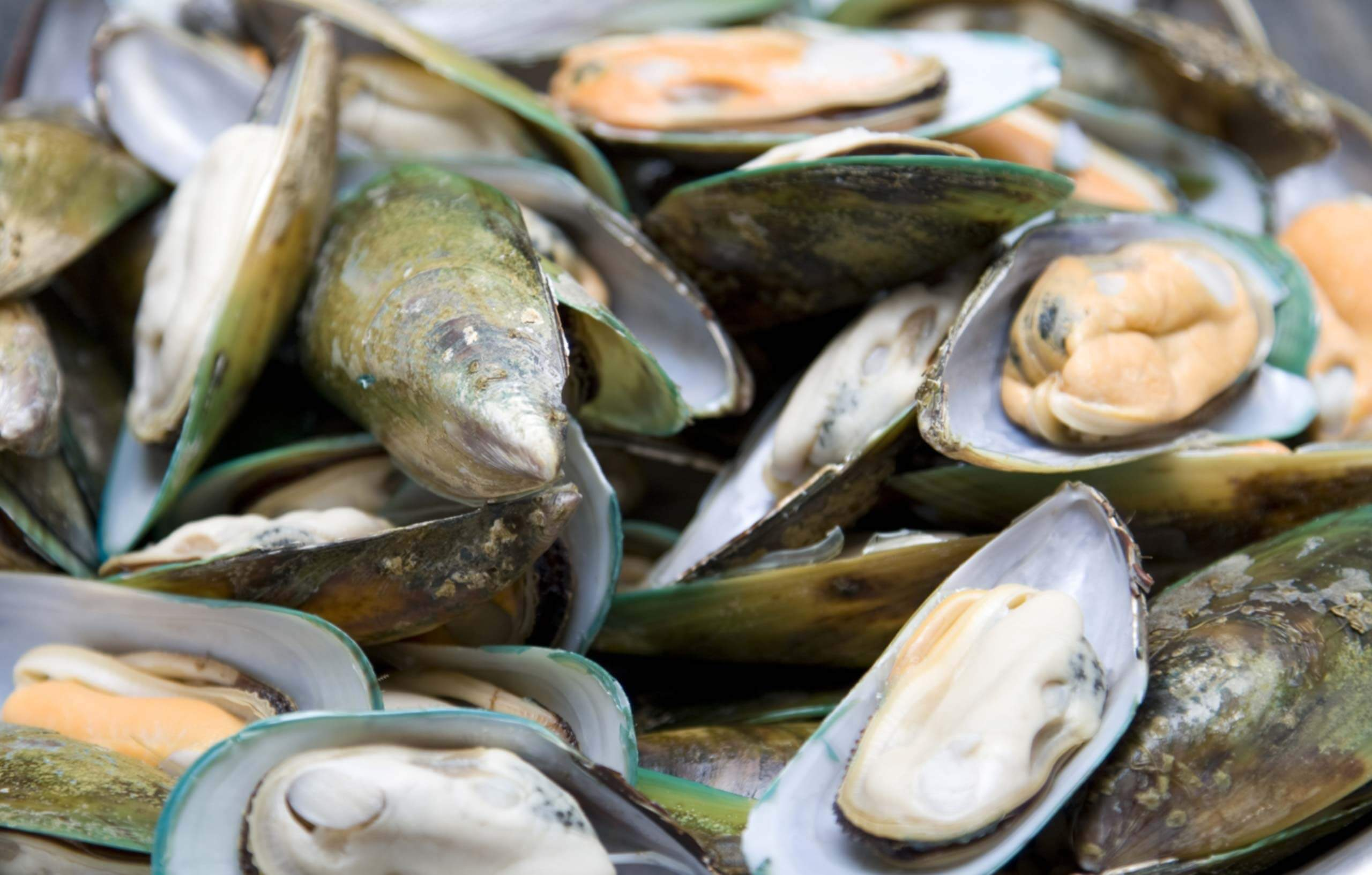What are Greenshell™ or Green Lipped mussels?